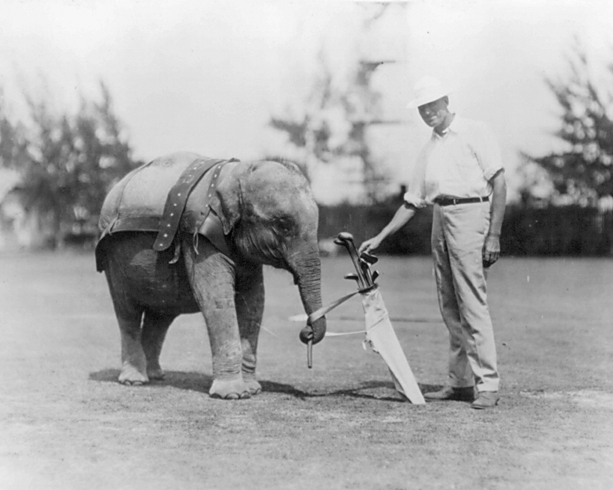 Elephant_caddy