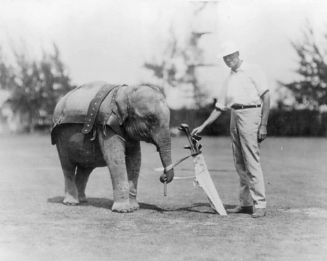 Elephant_caddy