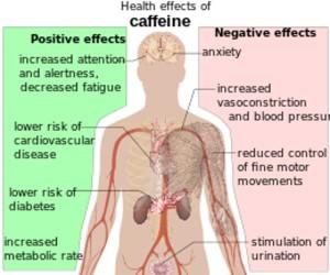effectsofcaffeine